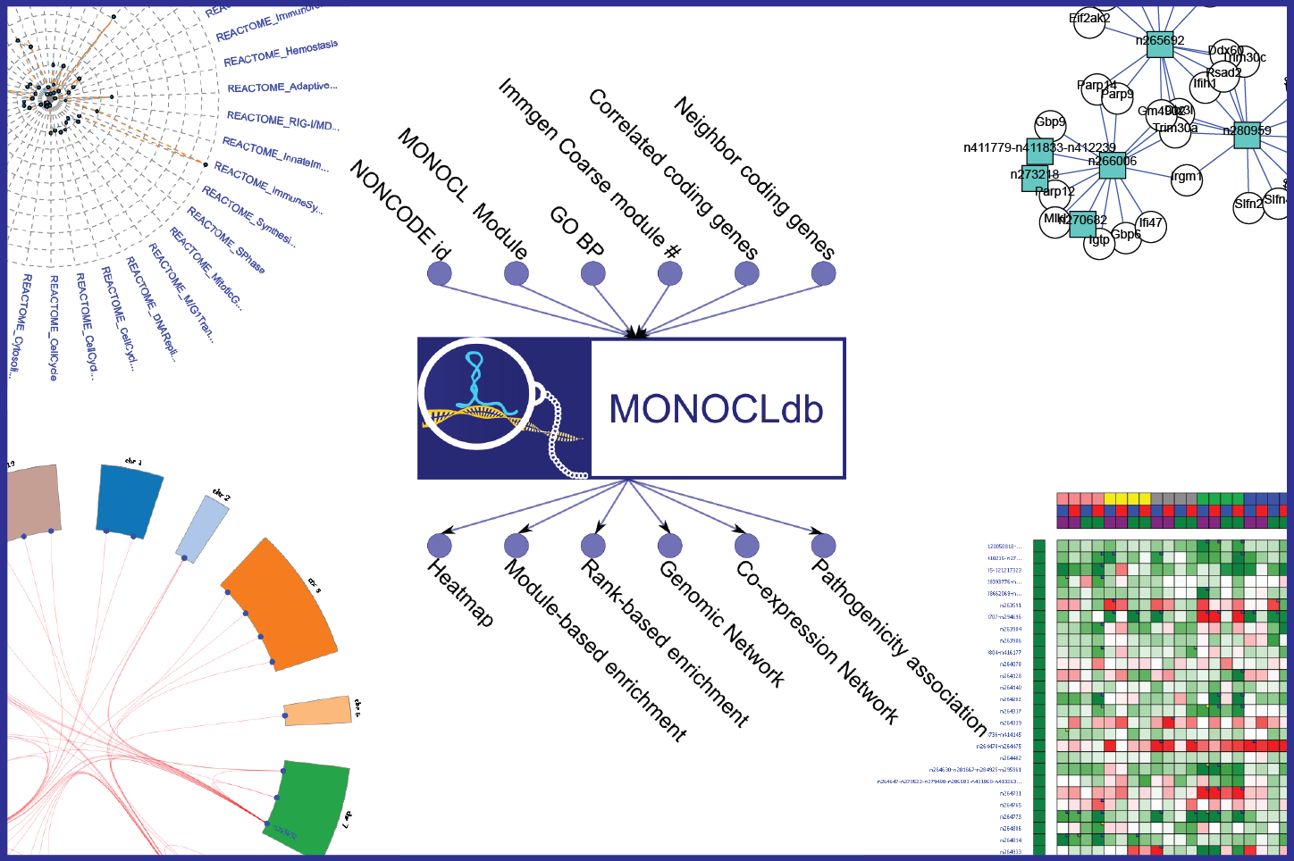 MONOCLdb: is an integrative and interactive database designed to retrieve and visualize annotations, expression profiles and functional enrichment results of long-non coding RNAs (lncRNAs) expressed in Collaborative Cross founder mice in response to respiratory infections caused by influenza and SARS-CoV viruses